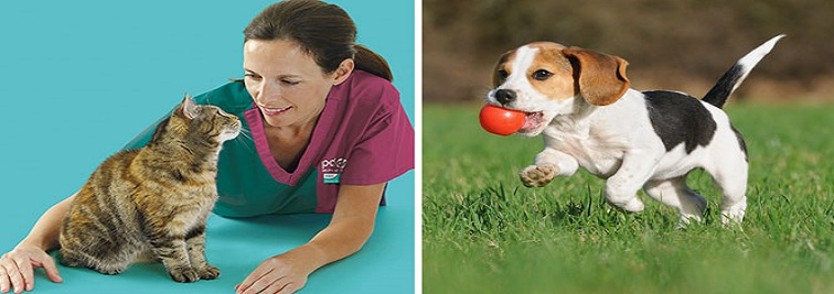 Huddersfield PDSA Pet Clinic