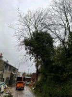 Abaddon Tree Services